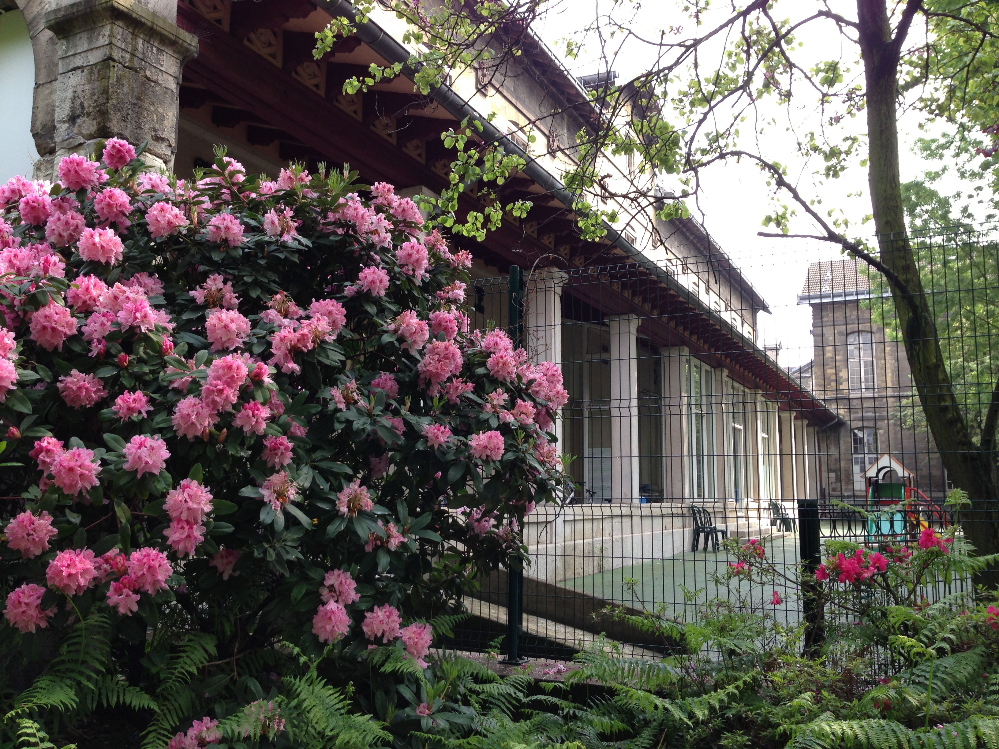 Sainte Anne Psychiatric Hospital in Paris A Hidden Sanctuary of Nature and Art
