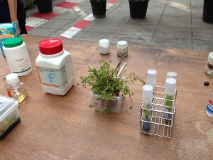 In vitro plant reproduction