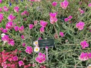 Jardin des Plantes flowers