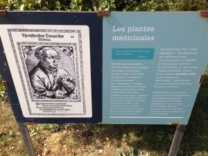 Jardin des Plantes medicinal plantes