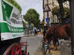 Paris Horses 2014