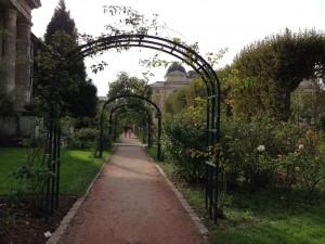 Rose Trelis garden