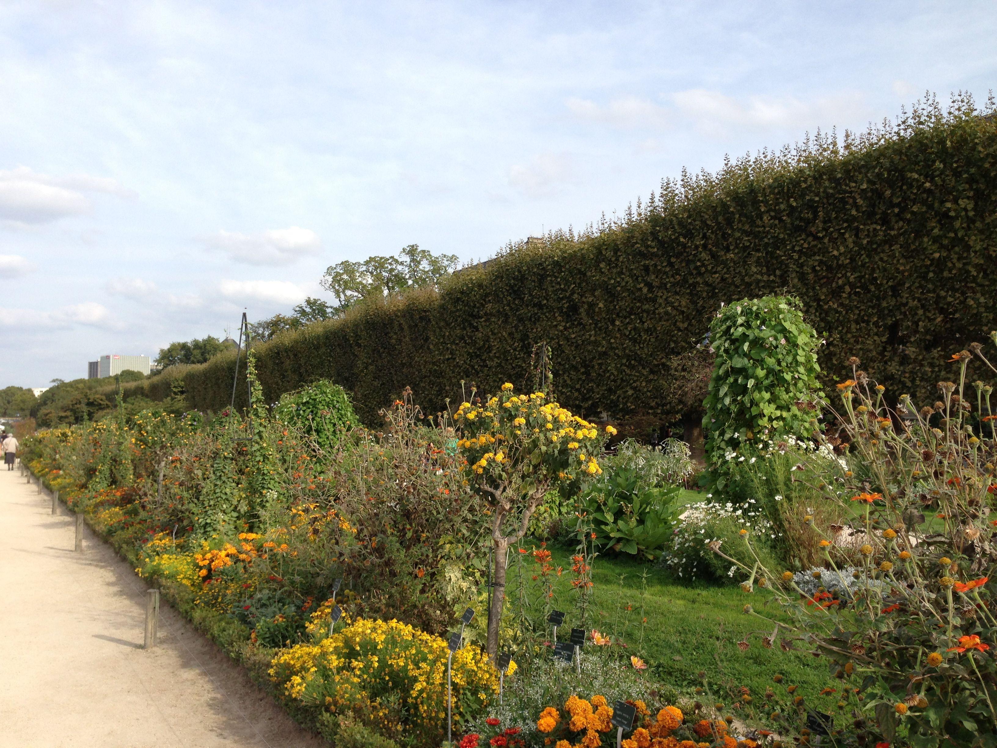 Jardin des plantes oldest botanical garden in paris for Jardin paris